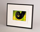Lime Tentacle Original Framed and Matted Photograph