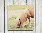 Country Pony -10x10 Canvas - shaggy pony photo - cute pony photo - home decor - country decor - horse decor.