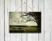 The Reading Tree - Canvas Wrap - Home decor - Tree art - Tree wall decor - Green decor - tree photography - tree photo