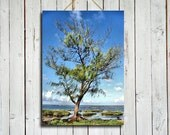Island Tree - Island photo - Island photography - Island tree photo - Beach photo - Blue decor - tree decor - tree photo