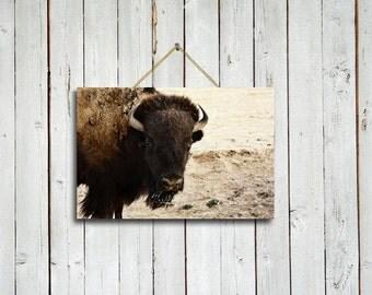 Watching - 10x15 print - Buffalo wall decor - Buffalo wall art - Brown rustic decor - Brown wall art - Brown decor - Bison art.