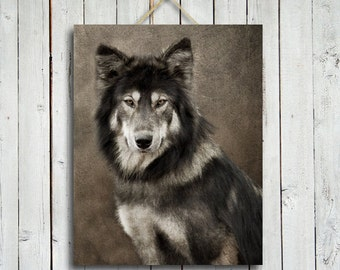 Portrait of a Wolf - Gallery Wrap Canvas Print - 16x24 in.  Wolf Canvas Print - Wolf Dog - Wolf decor - Wolf Art - Wolf photography