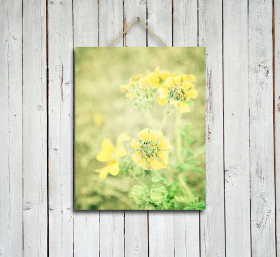 Yellows - 8x10 in -yellow flowers photo - yellow and green decor - nursery decor- shabby chic - yellow flowers photography - yellow art