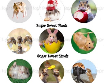 INSTANT DOWNLOAD Cute Funny Hamster Inspired 1 inch circle Bottlecap Images 2 4x6 sheets