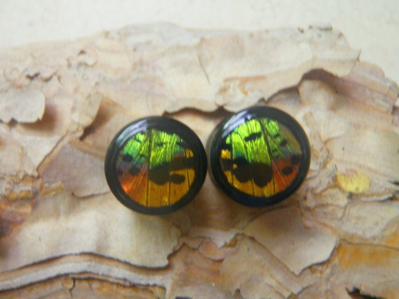 "Butterfly Wing Plugs 9/16"" Double Flare - Sunset Moth"