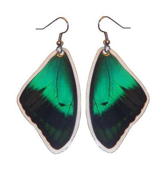 Real Green Butterfly Wing Earrings - Papilio Albertisi