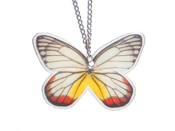 Real Whole Butterfly Necklace - Delias Hyparete