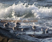 Birds in waves at Halibut Point  State Park Rockport Ma 5x7 photo cards
