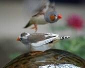 2  playful Finches on a Garden globe  photo card 5x7