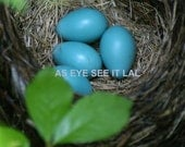 ROBIN EGGS In NEST 2 5x7 photo greeting card