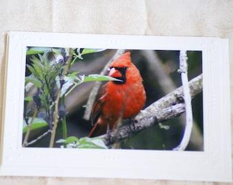 Cardinal photo greeting card 5x7