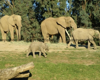Elephant Family Grazing Photo Greeting Card 5x7 blank inside