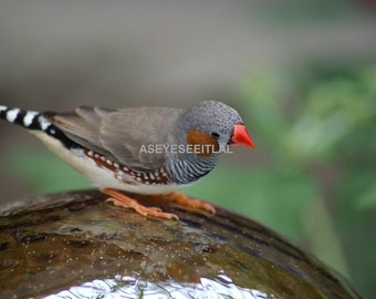 Finch on a Garden globe  photo card 5x7