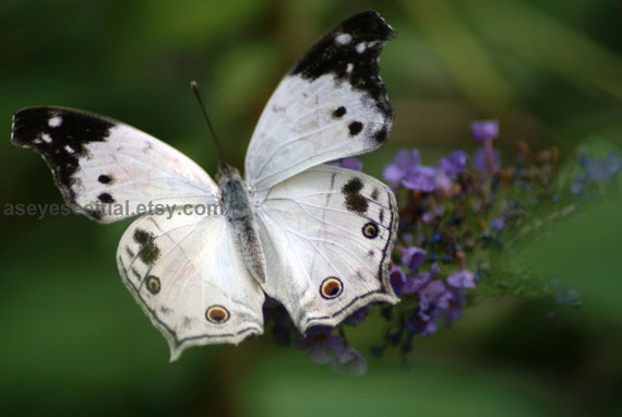 White and Black  Butterfly photo greeting card 5x7