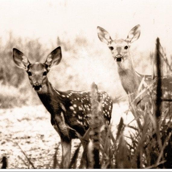 Two deer photo - 5x5 fine art nature print, sepia toned