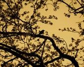 Raven in Sepia
