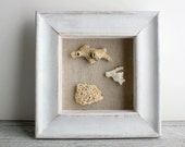 Little Shadowbox of Vintage Coral Specimens