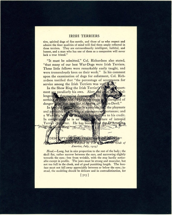 Irish Terrier  - Vintage Illustration - Printed on Vintage Dog Book Page