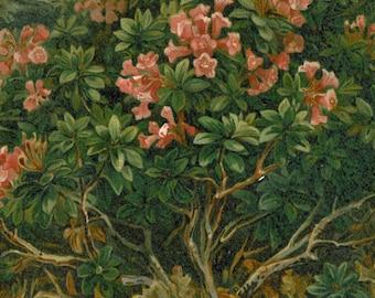 Roses  Antique Botanical Print Lithograph 1892 Tyrol Alps Flowers  Kerner von Marilaun