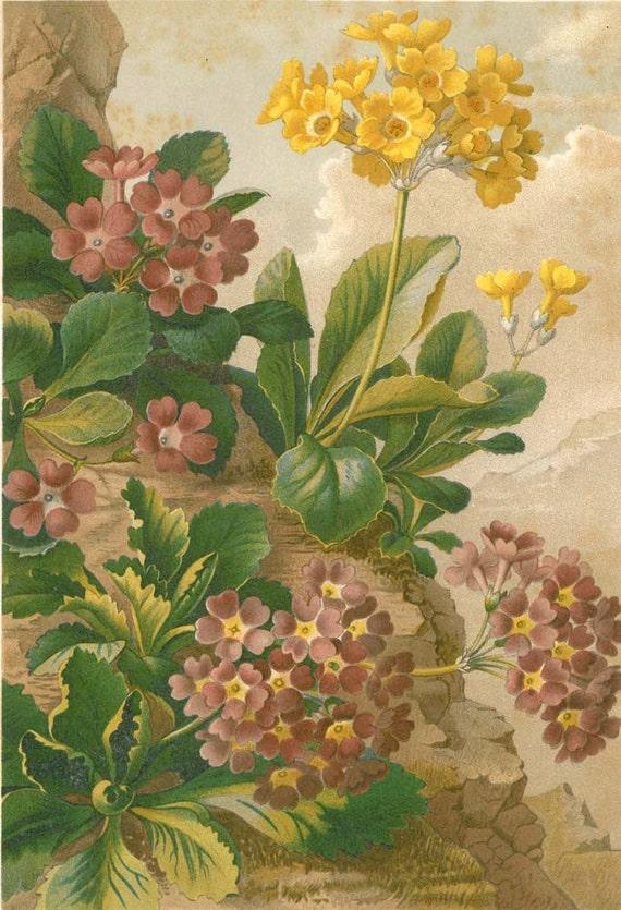 Spring Hybrid Flowers 1892 Antique Lithograph Print Art Illustration
