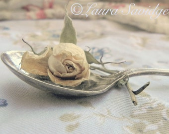 Spoon IV Postcard