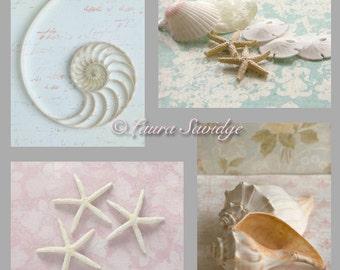 Set of 4 Seashell Postcards