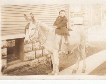 Vintage/ Antique postcard photo of a boy riding a hairy donkey