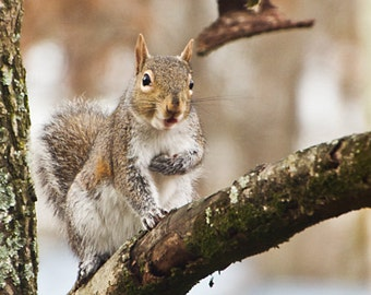 """Squirrel """"Who Me"""" - Photography Print"""