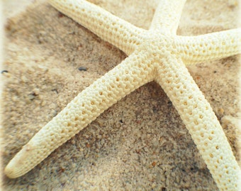Nautical Wall Art, White Starfish Photography, Coastal Decor, Beach House Decor, Nautical Decor, Sea Star, Wall Art Print, Beach Print