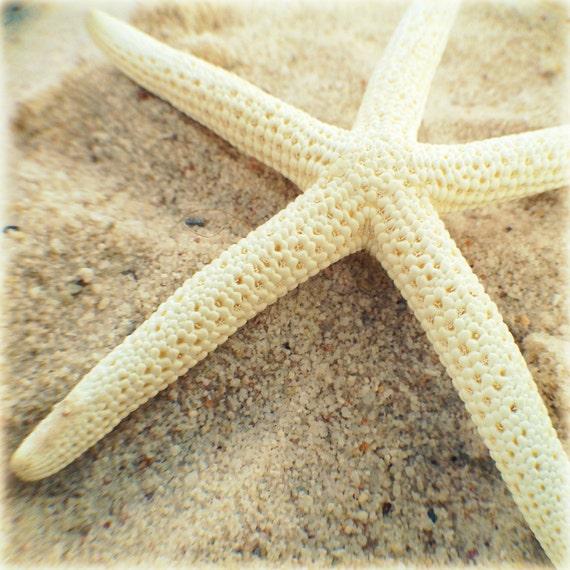Nautical Wall Art, White Starfish Photography, Coastal Decor, Beach House Decor, Nautical Decor, Sea Star, Wall Art Print, Beach Print