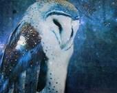 Owls, owl art, owl painting, night, stars, sky, home decor, wall art, owl photography, barn owl, owl flying, owl tattoo, owl sky, modern