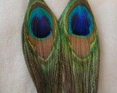 Glamorous Peacock Feather Earrings