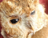 Antique British Collection Taxidermied Owl
