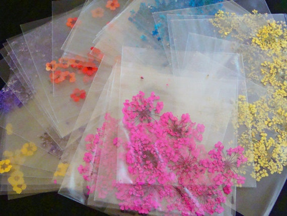 6 Bags  - 36pcs of Real Dried Flower Assorted Styles for crafting is now available on Etsy.com from gooddealsinthebox,