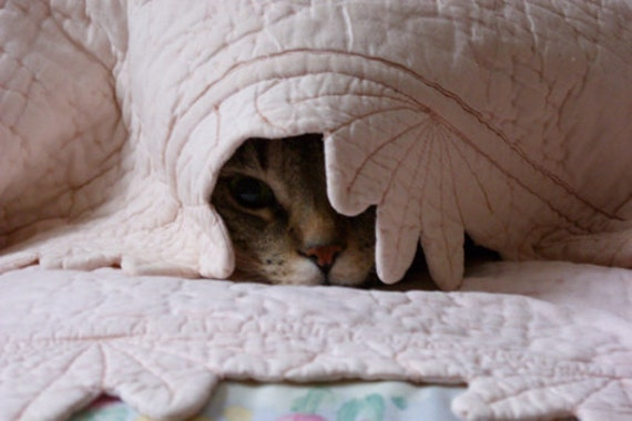 Hiding Cat Card - Tabby cat hiding under quilt, scaredy cat, cat nose, cat's eye, cat photo card, cat birthday card, cat get well card