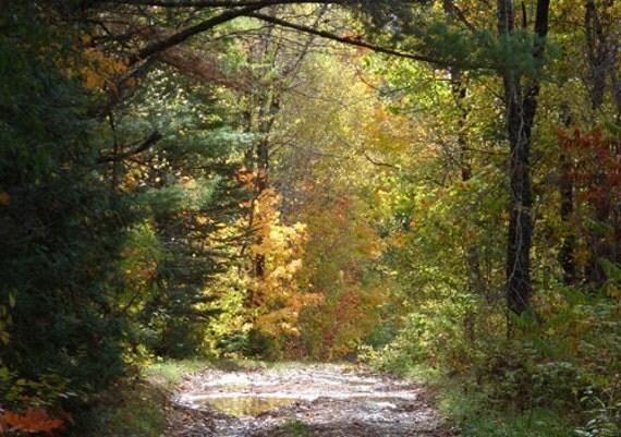 Autumn Leaves Card - Autumn leaves & woodland path in Maine, orange leaves, yellow leaves, autumn trees, sunlight, autumn wedding