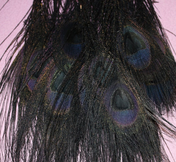 Black Peacock Feathers, Quantity of 6