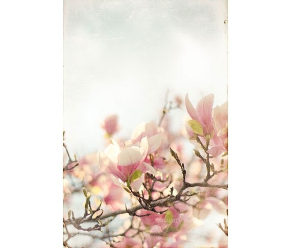Blooming Magnolia - shabby chic photo print romantic photograph botanical decor flower picture spring blossom bloom soft pink nature