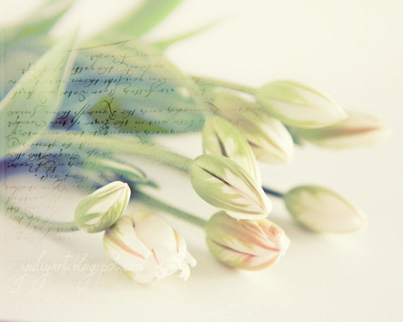 Sunshine Tulips romantic fine art photography print botanical garden glamour wall art spring trend wedding gift bride love flower white mint