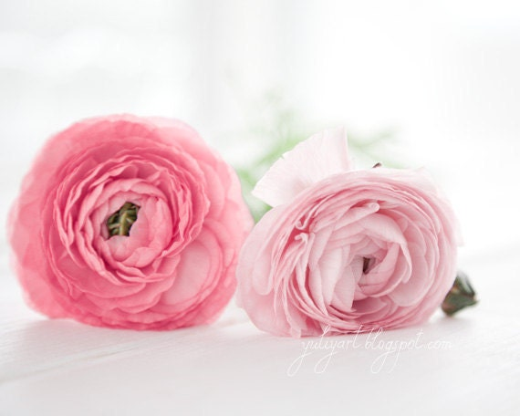Pink Ranunculus - dreamy flower photography romantic gift for her botanical nursery decor glamor luxury statement pale pink sunshine white