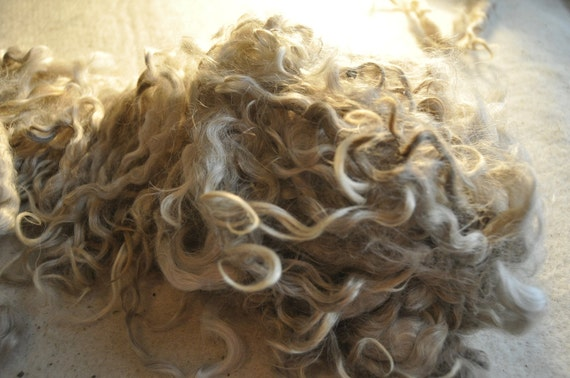 Long  Mohair Locks- Intact  lock structure great for Dolls