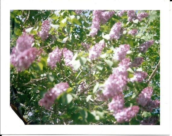 Flower Pola