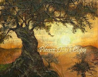 Olive Tree Vineyard in Sunset 16X20 Print