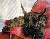 Brindle Great Dane Bridgett 8x10 Art Print