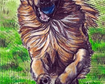 Golden Retriever Running with Ball 8x10 Print