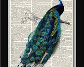 PEACOCK Dictionary Art Print - illustration collage upcycled dictionary page book art print No 19