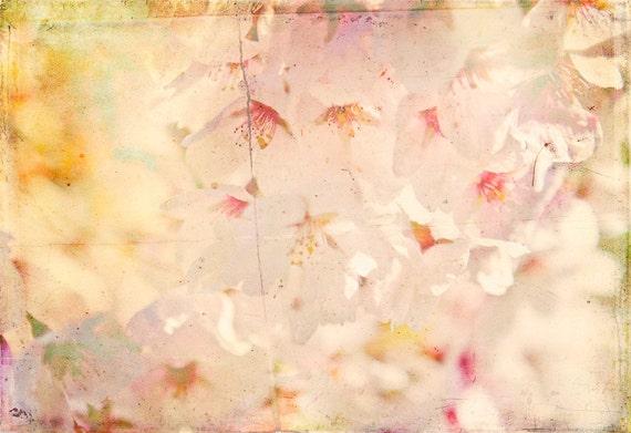 "Pretty in pink - 8x10"" fine art flower photography print"