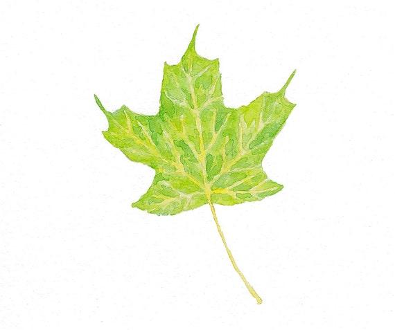 Sugar Maple Leaf - Original Watercolor Painting