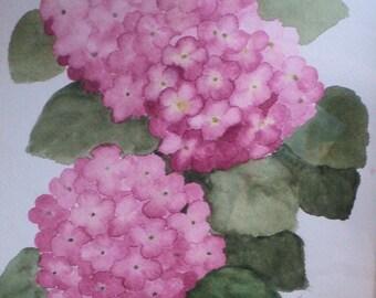 REDUCED     Pink Hydrangeas watercolor