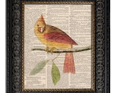 dictionary art vintage RED CARDINAL female bird book page print on vintage dictionary page 8x10